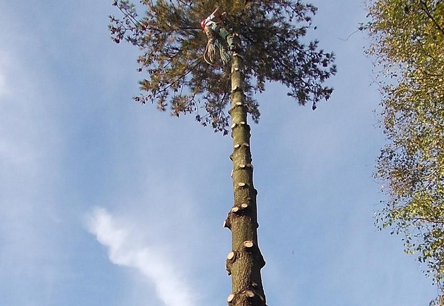 Gefahrenbaum Fällung